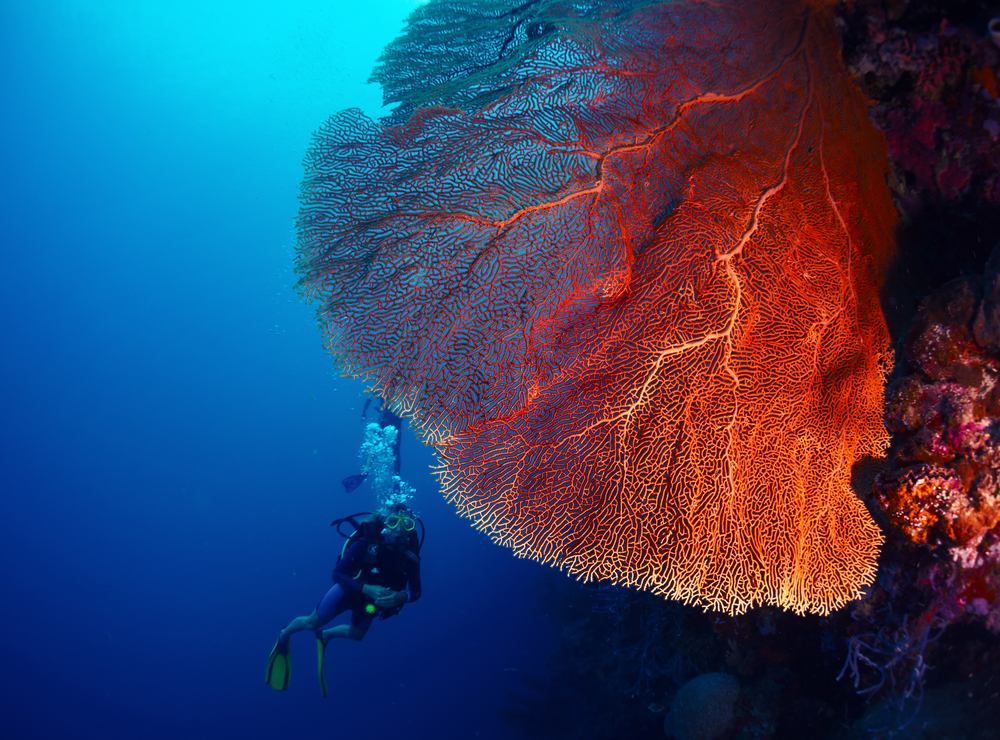 5 Diving tips to help your buoyancy – Chania Diving Center